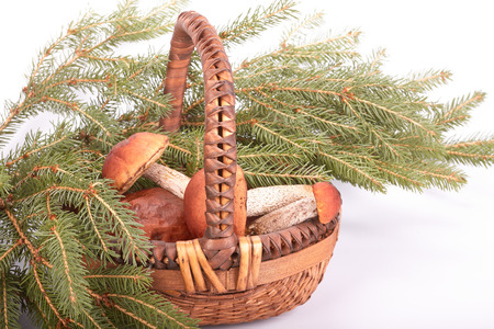 Autumn still-life with mushrooms, a basket and fir-tree branches on a white background.