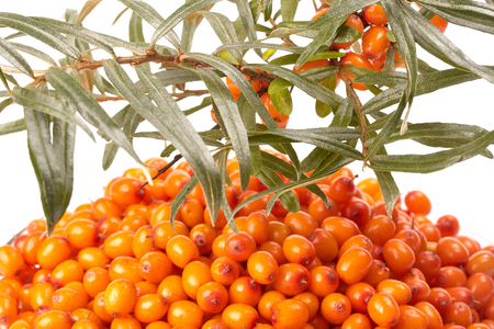 argousier: Background from sea-buckthorn berries