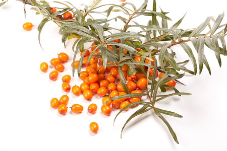 officinal: Branch of sea-buckthorn berries and handful of berries on a white background.