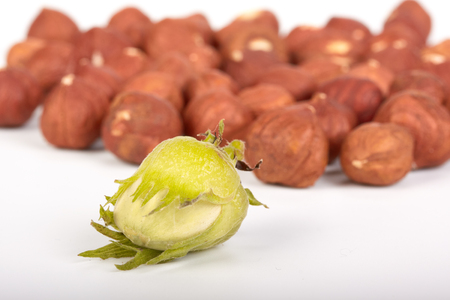 filbert: Background from a ripe filbert. Close up. Stock Photo