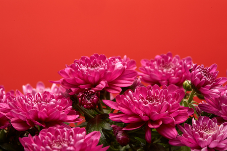 Bouquet of  flowers on a red  background. Chrysanthemum.