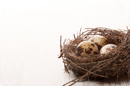 Wachteleier in einem wirklichen Nest auf einer woode Tabelle auf einem weißen Hintergrund mit Kopienraum. Standard-Bild