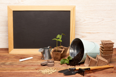 Gardening tools, bucket with soil, peat pots, seeds,  young seedlings  and blank sheet in frame  on a wooden  background. Concept of spring gardening. Reklamní fotografie