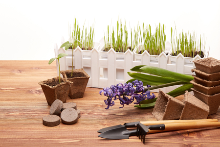 peat pot: Gardening tools, peat tablets and pots, seeds and young seedlings on a wooden table on a white background. Concept of spring gardening.