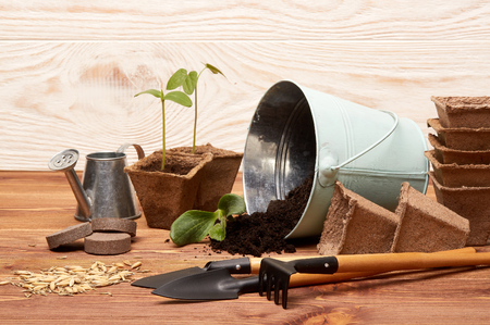 Gardening tools, bucket with soil, peat pots, seeds and young seedlings on a wooden background. Concept of spring gardening. Stock Photo