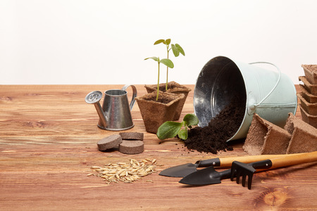 turba: Gardening tools, bucket with soil, peat pots, seeds and young seedlings on a wooden table on a white background. Concept of spring gardening. Foto de archivo