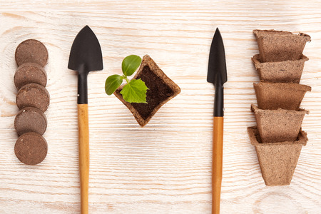 peat pot: Gardening tools, peat tablets and pots and young seedlings on a wooden background. Concept of spring gardening. Top view. Stock Photo