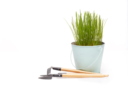 Gardening tools, bucket with young green oats on a white  background. Concept of spring gardening. Stock Photo