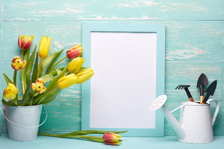 Gardening tools, watering can, fresh tulips flowers in a bucket and blank sheet in frame  on a wooden green background. Concept of spring gardening. Фото со стока