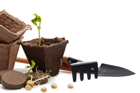 Still life with gardening tools, peat tablets and pots and young seedlings isolated on a white background. Concept of spring gardening, Vegetable growing.