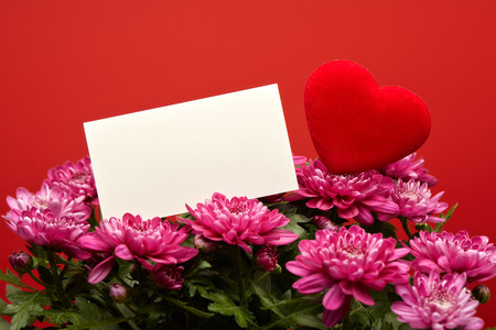 Bouquet of fresh violet  flowers (chrysanthemum) and red hearts on a red background. Empty card. Copy space for text.  Valentine's day. Banque d'images