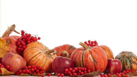 Festive autumn still life with pumpkins, red apples, berries and leaves on light wooden table on white background with copy space. Concept of autumn harvest, happy Thanksgiving  day or Halloween.