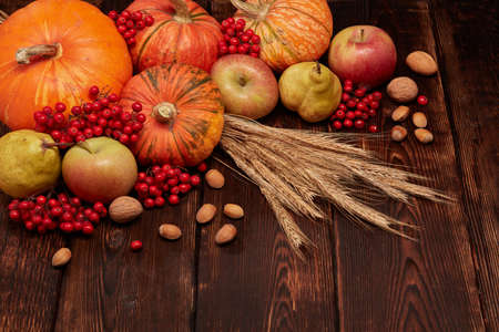 Festive autumn still life with pumpkins, apples, red berries, nuts, rye ears on dark wooden surface on brown background with copy space. Concept of autumn harvest, happy Thanksgiving  day or Halloween
