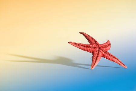 Starfish with large shadow and limited DOF on a light simulated beach background. You can see more of the same serie in my portfolio. photo