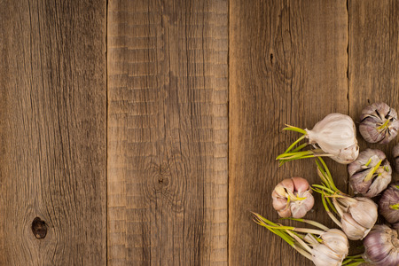 sprouted: sprouted garlic on a old wooden table