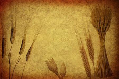 Retro Wheat Ears photo
