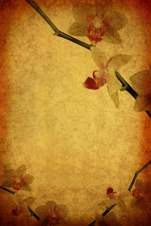 vintage old burnt paper with orchid photo