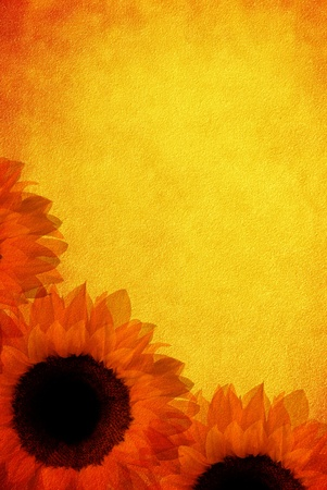vintage old burnt paper with sunflowers Stock Photo - 12891761