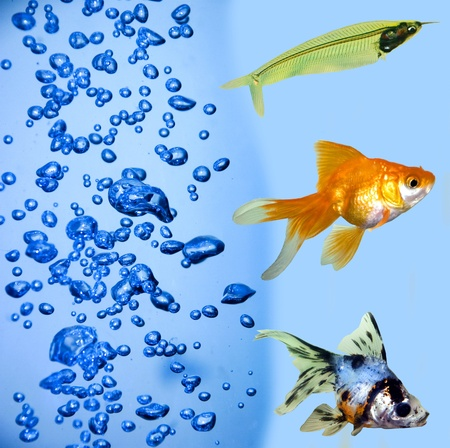 collection of a tropical fish on a blue background   photo