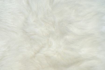 Closeup of white fur coat photo