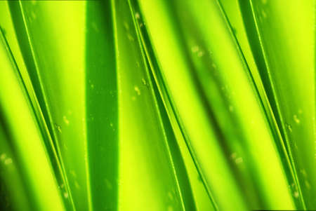 Green leaf with drops of water. photo