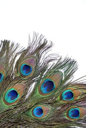 peacock feather eye on white background  photo
