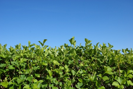 hedgerow: hedgerow Stock Photo