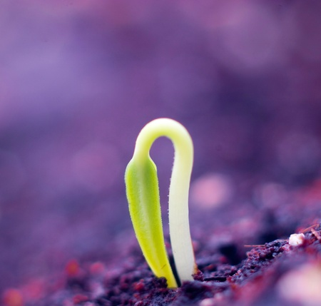 germinate: Growing little plant of macro  Stock Photo