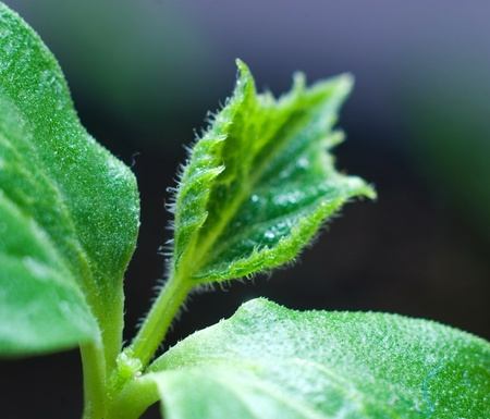 emerging economy: growing little plant of close up