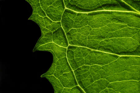 green leaf texture of close up photo