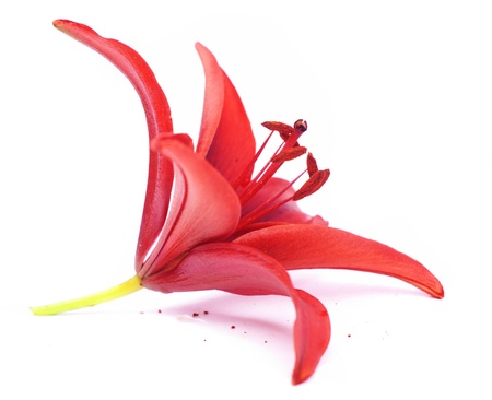 pink lily: red lilies isolated on white Stock Photo