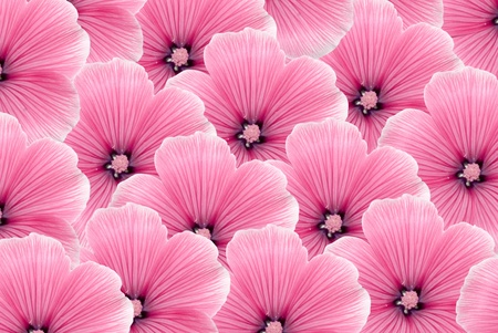 summer pink flowers of background photo