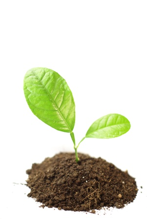 dirt background: Growing green plant isolated on white background