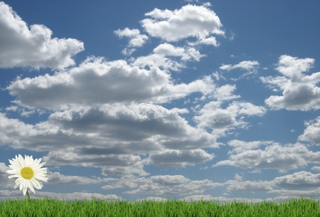 field of daisies and perfect sky Stock Photo - 13094860