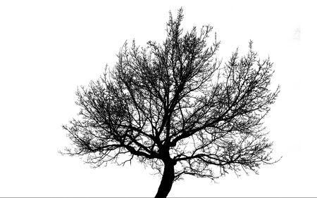 siluet: tree
