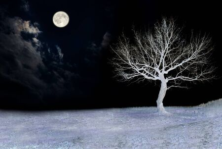 The full moon and alone tree on wooden texture photo