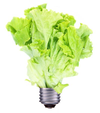 Light bulb and green lettuce growing isolated on white photo
