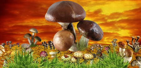 mortally: funny mushroom meadow, concept background Stock Photo