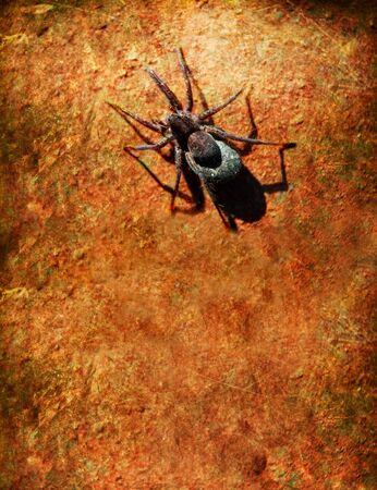 ferruginous: spider on an old ferruginous wall