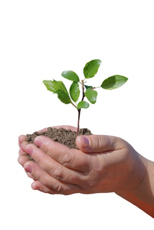 plant in hands Stock Photo - 13451093