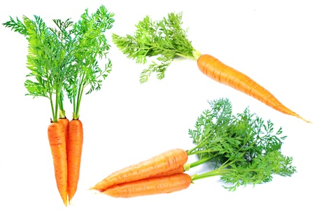 Carrot isolated on white background Stock Photo - 13445559