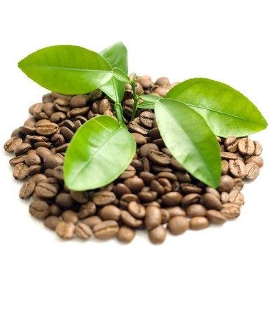 Coffee grains and coffee leaf  photo