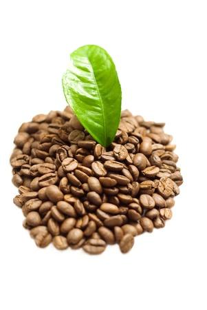 Coffee grains and coffee leaf  photo