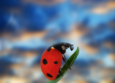 lady bug: ladybird on grass with blurred clouds sky Stock Photo