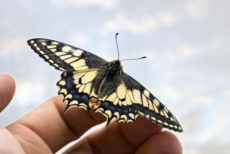 ecosavy: butterfly on hand with background sky