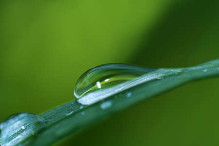 Fresh grass with dew drop close up photo