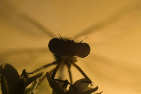 silhoutte gragonfly on flower with sunset photo
