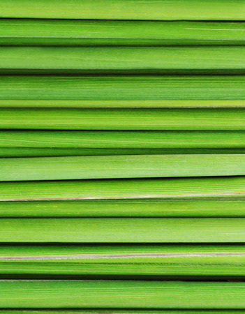 caulis: Green grass texture of close up