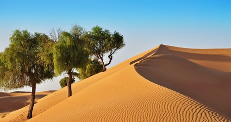 desert with big tree in blue sky Stock Photo - 15464686