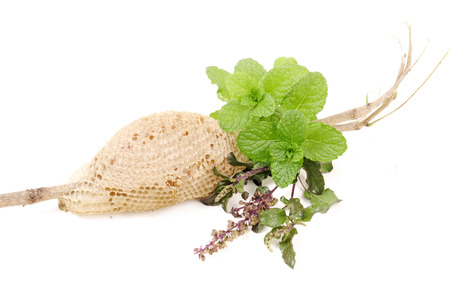 tulsi: basil  tulsi , mint and honey in group on isolated white Stock Photo